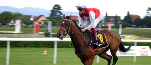 Image of race horse and jockey