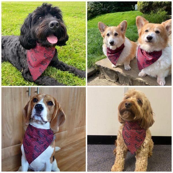 Dog Bandana models